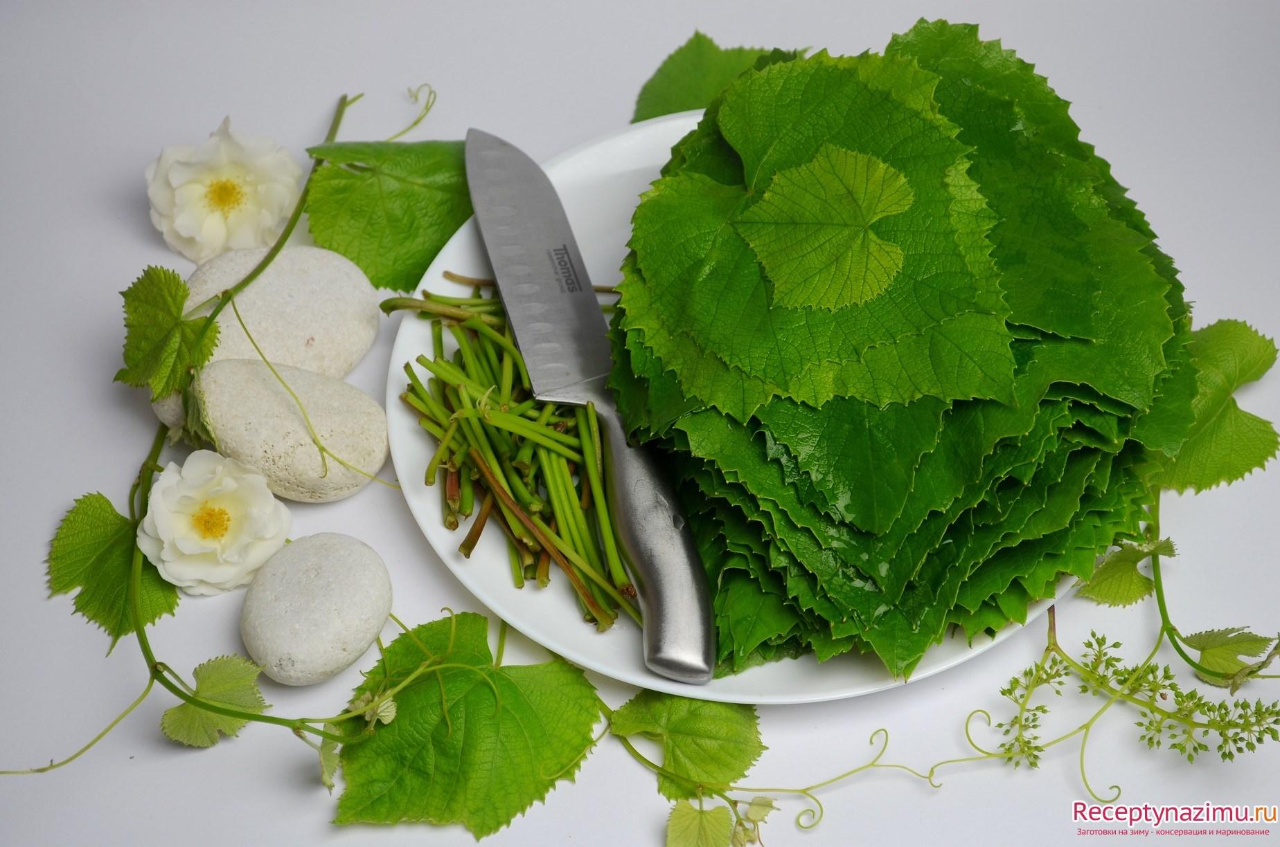 Рецепт долмы засолка виноградных листьев